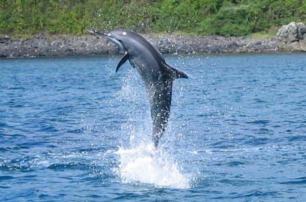 Golfinho Rotador comemora 21 anos de dedicação à conservação marinha