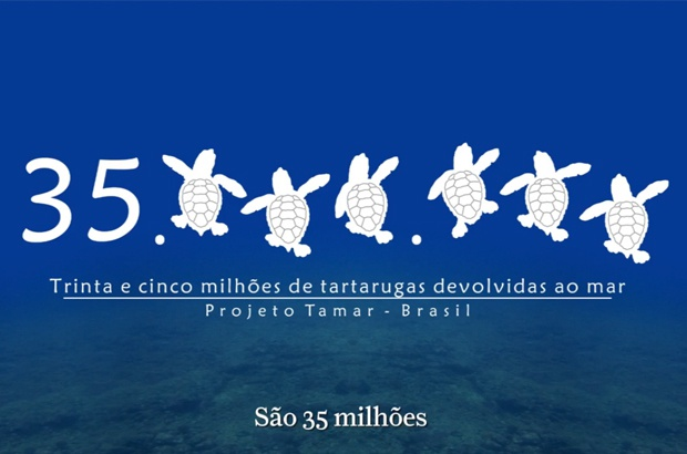 TAMAR celebra 35 milhões de tartarugas marinhas protegidas no Brasil