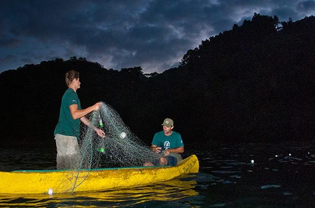 Tamar sugere mudança no horário de pesca com redes de espera em Ubatuba para proteger tartarugas marinhas