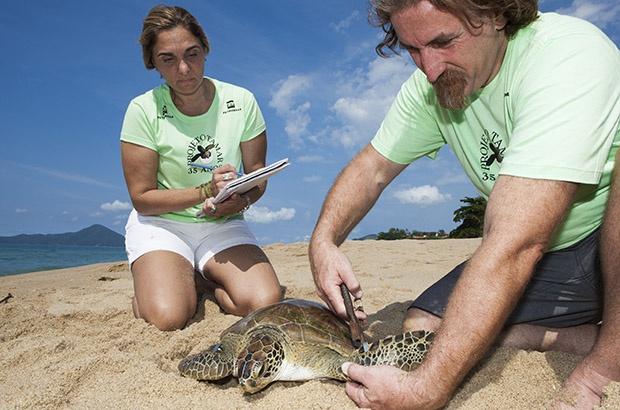 Programa de marcação mostra as rotas das tartarugas pelos mares do mundo