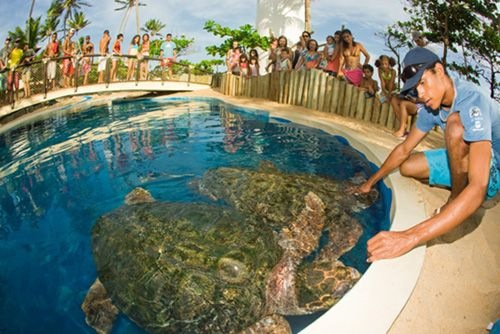 Capacitação para ações de sensibilização ambiental no Tamar da Praia do Forte