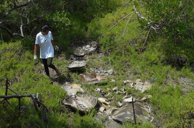 Tamar alerta para ameaças às tartarugas marinhas no Ceará