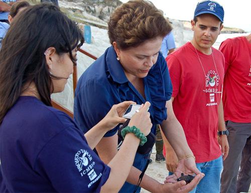 Presidente solta ao mar filhotes de tartaruga protegidos pelo Tamar