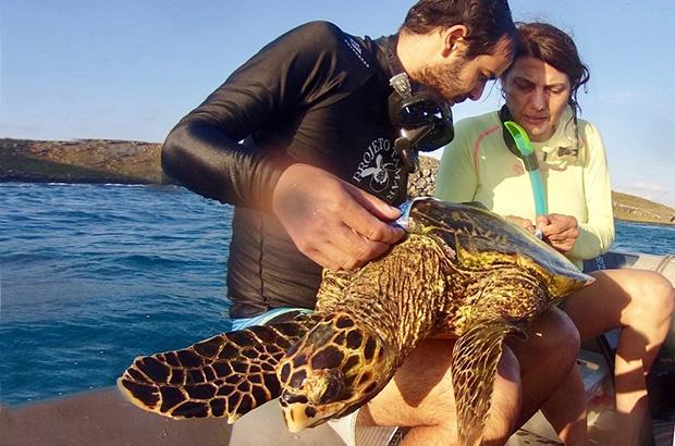 TAMAR faz visita de pesquisa para caracterizar Abrolhos como área de alimentação da tartaruga-de-pente