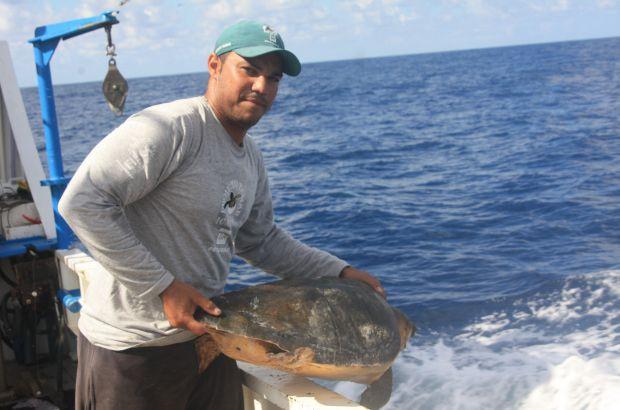 Monitoramento de cruzeiros de pesca revela dados sobre diferentes tipos de captura incidental de tartarugas