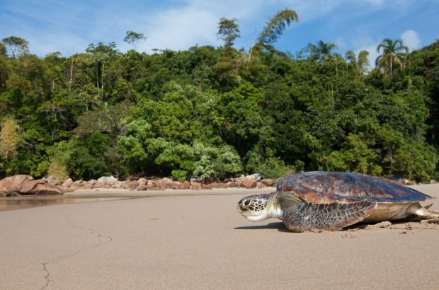 TAMAR Ubatuba é Posto Avançado da Reserva da Biosfera da Mata Atlântica