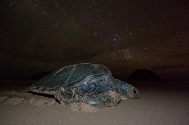 Mudanças ecológicas diminuem velocidade de crescimento das tartarugas marinhas no Atlântico Ocidental