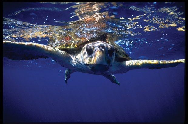 Tamar mostra resultados em congresso sobre as ciências do mar