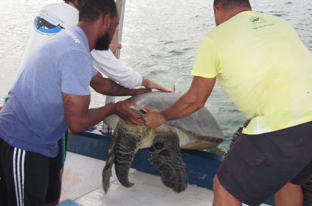 Diário de bordo: Pedra da Tartaruga