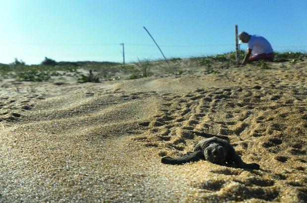 Bem-vindos ao Condomínio das Tartarugas Marinhas