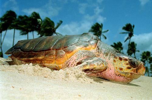 Convenção para proteção das tartarugas marinhas aconteceu na Bahia