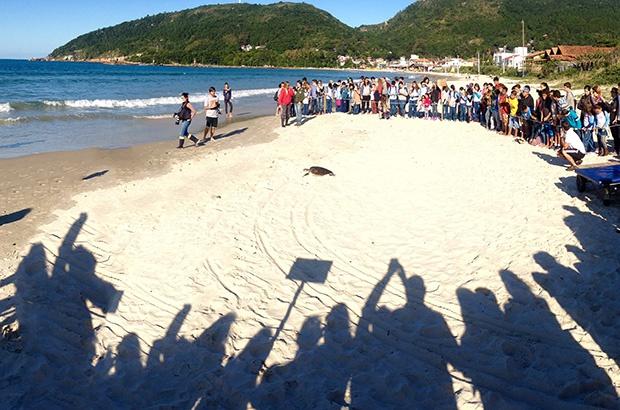 Dia Internacional da Tartaruga Marinha foi comemorado no Tamar