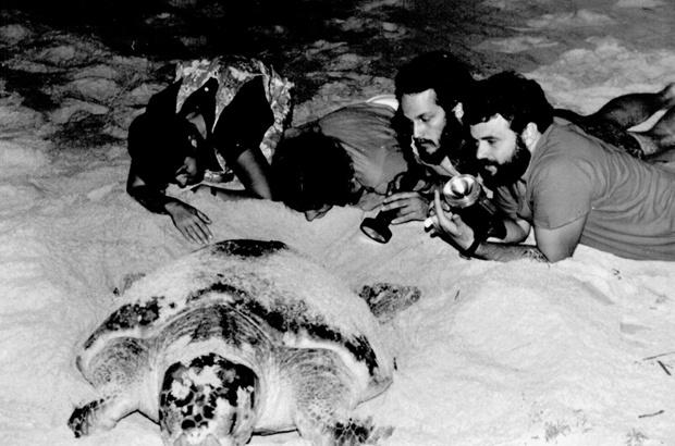 Tamar contribui com formação de especialistas em conservação de tartarugas marinhas