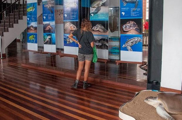 Visite a exposição do Projeto Tamar no Museu da Gente Sergipana