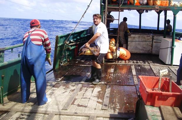Tartarugas marinhas do Atlântico ganham mais atenção da Comissão do Atum
