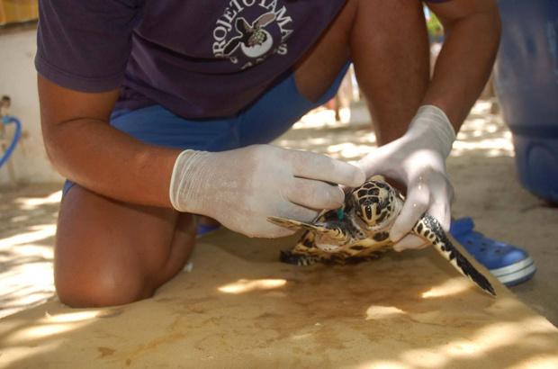 Rede Jaboti Assobiador: união pelas tartarugas nas praias de Fortaleza
