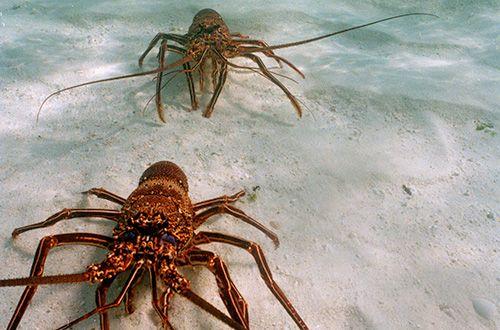 Lideranças comunitárias do Ceará em oficinas sobre uso sustentado da lagosta