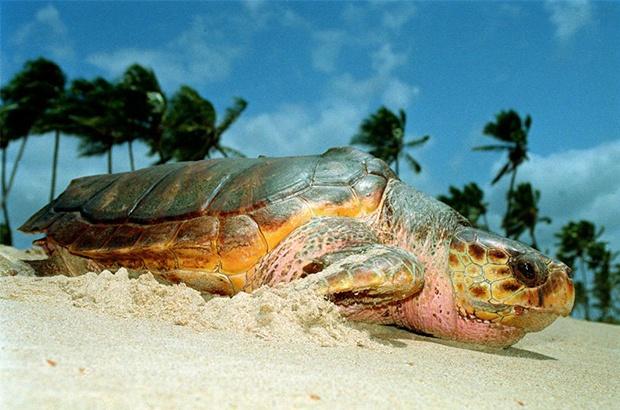 Bases do Tamar na Bahia unidas pela limpeza das praias