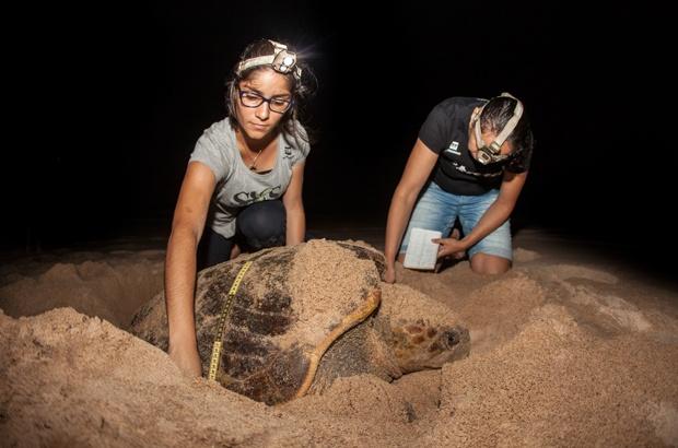 Temporada de reprodução de tartarugas marinhas no Brasil requer atenção nas praias e no mar