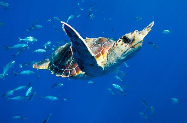 Projeto Tamar celebra mês do meio ambiente, dos oceanos e das tartarugas marinhas