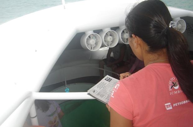 Iniciada pesquisa para estimar popula��o de tartarugas marinhas em Fernando de Noronha