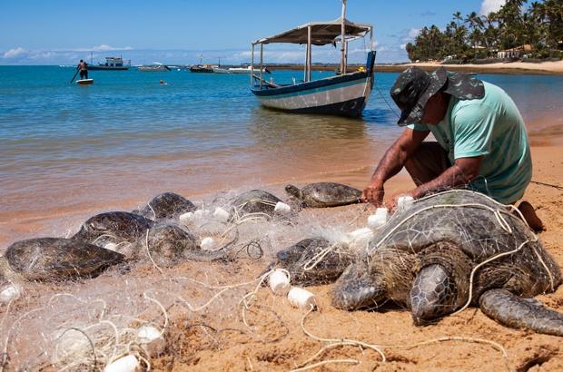 Diário de Bordo: o perigo das redes de pesca para a sobrevivência das tartarugas marinhas