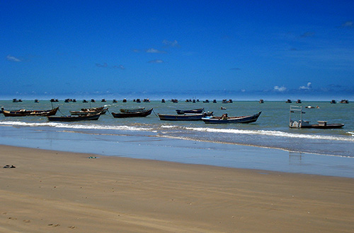 Peba tem índice preocupante de captura pela pesca