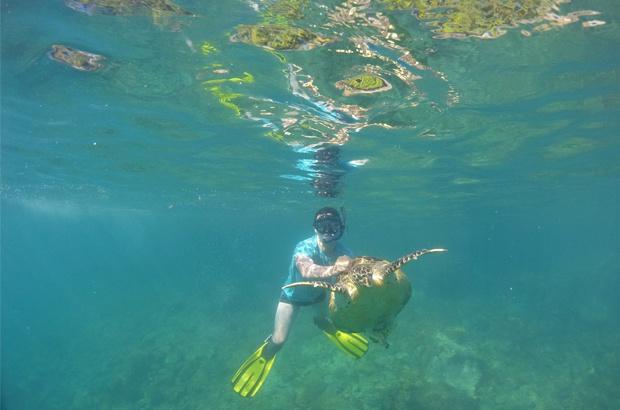 Projeto Tamar vai conhecer as tartarugas de pente em Ubatuba/SP