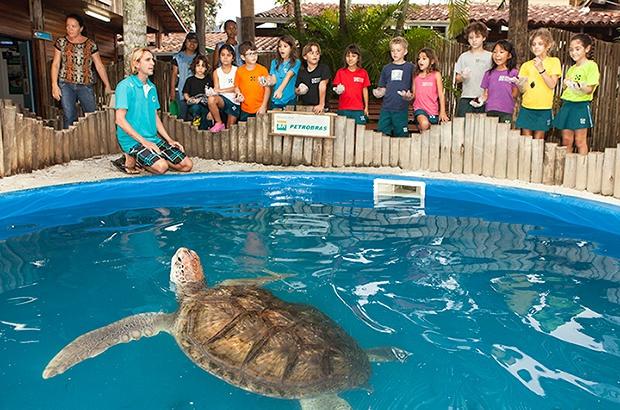Programação especial Semana do Meio Ambiente e Dia Internacional da Tartaruga Marinha