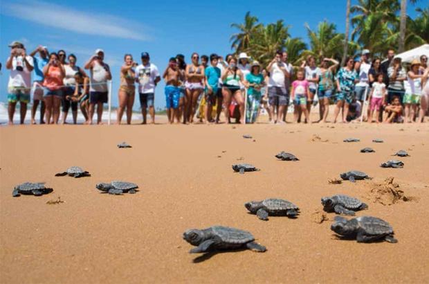 Itapuã, Brasil: um estudo de caso para engajamento urbano na conservação de tartarugas