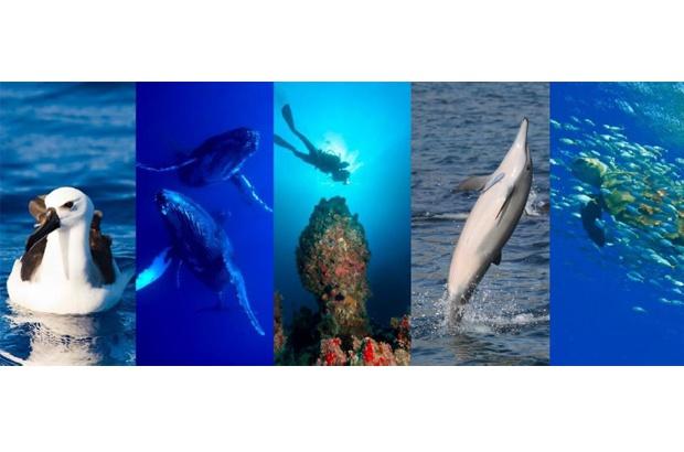 Rede BIOMAR completa 10 anos de resultados positivos para a conservação marinha