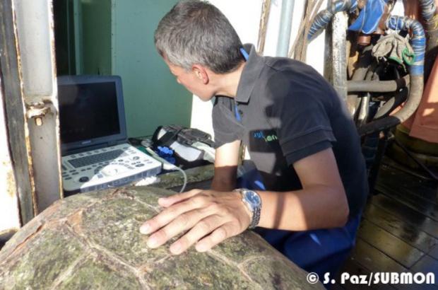 Realizado primeiro experimento para avaliação de doença descompressiva em tartarugas marinhas