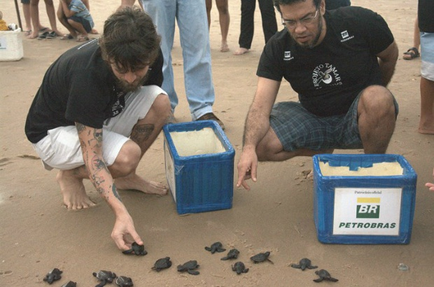Saulo lançou moeda para proteger as tartarugas marinhas
