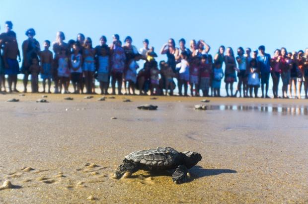 TAMAR compartilha com todos os cidadãos a responsabilidade da proteção às tartarugas marinhas