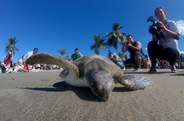 Mês dos Oceanos e das tartarugas marinhas: conservação, educação e cidadania