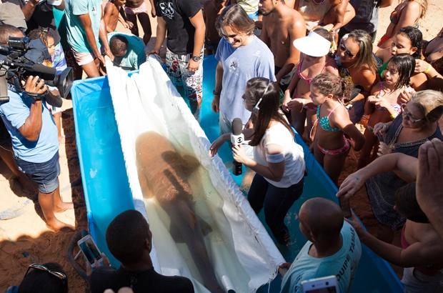 Tubarão-lixa ameaçado de extinção voltou para casa após recuperação no Tamar