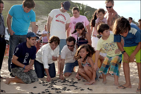 Governadora do Rio Grande do Norte solta filhotes de tartaruga na praia de Pipa