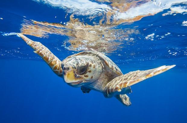 Pesquisa revela informações sobre tartarugas marinhas no sul do Brasil