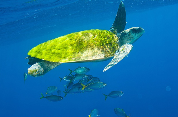 16 de junho é o Dia Mundial da Tartaruga Marinha!