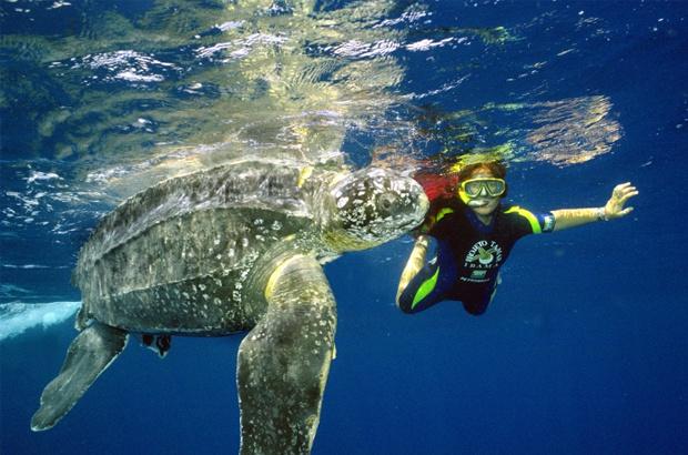 Novas ações para proteger as tartarugas marinhas