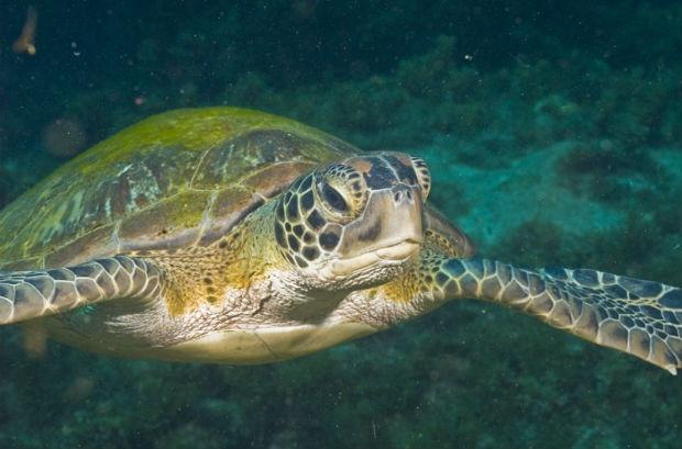 Monitoramento de pesca tradicional ajuda a avaliar crescimento da população de tartarugas em SP