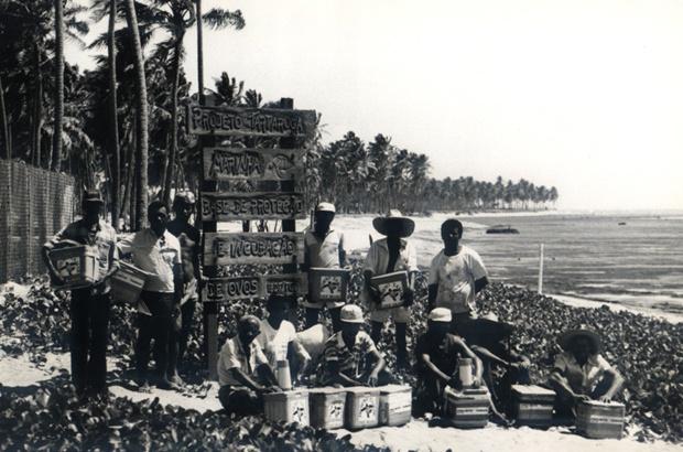 Estudo mergulha na história do TAMAR e analisa biografias de tartarugueiros