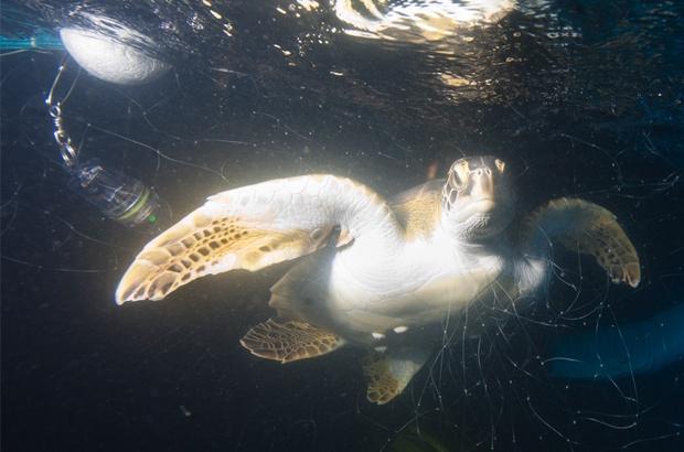 Pesquisa busca reduzir captura incidental de tartarugas marinhas na pesca