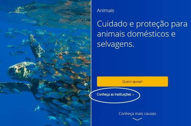 Vai de Visa para proteger as tartarugas marinhas