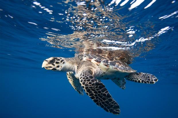 Viva o Dia Internacional da Tartaruga Marinha!