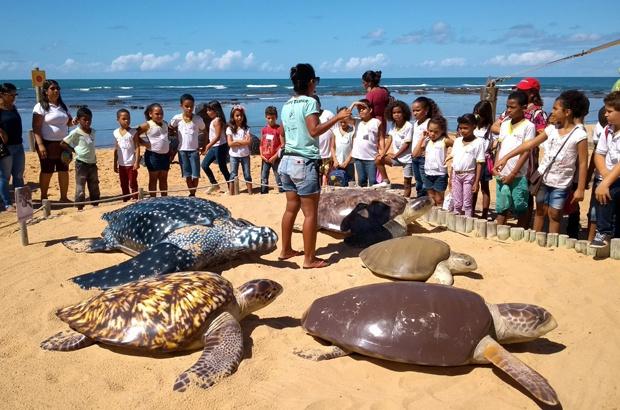 Viva o TAMAR: Um mergulho no conhecimento da pesquisa e conservação