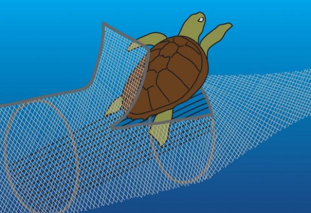 Dispositivo que diminui a captura de tartarugas começa a ser testado nas redes de arrasto de camarão