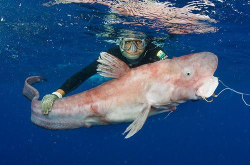 Pescaria testa anzol circular e captura nova espécie de peixe