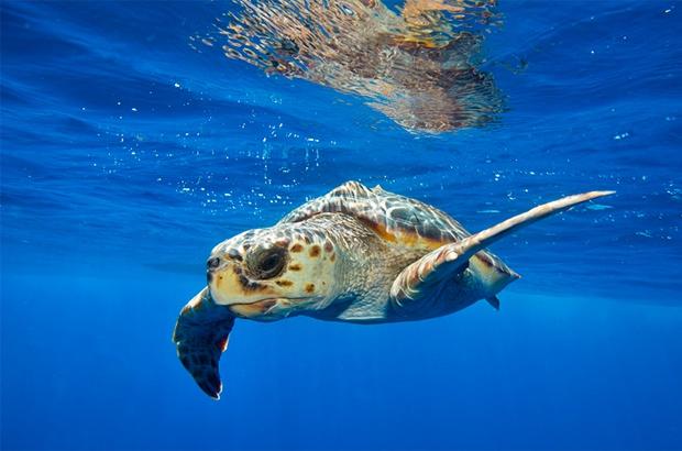 Como surgiram as políticas públicas de conservação marinha no Brasil