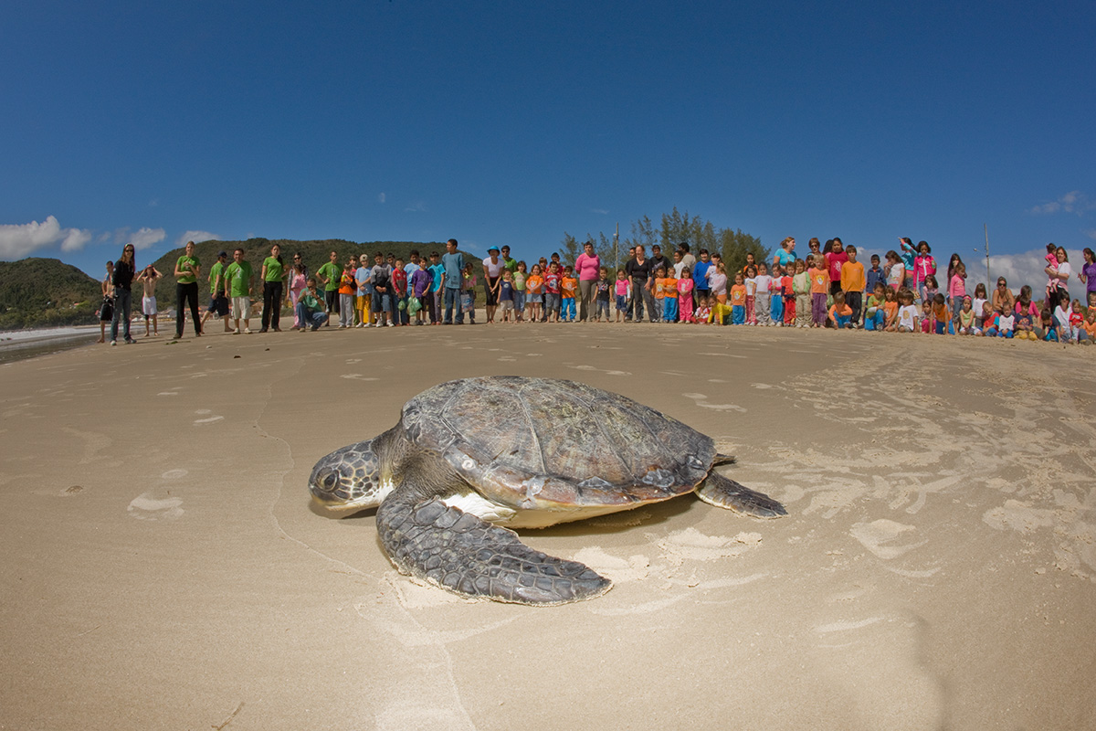 Centros de reabilitação fazem balanço de tartarugas devolvidas ao mar